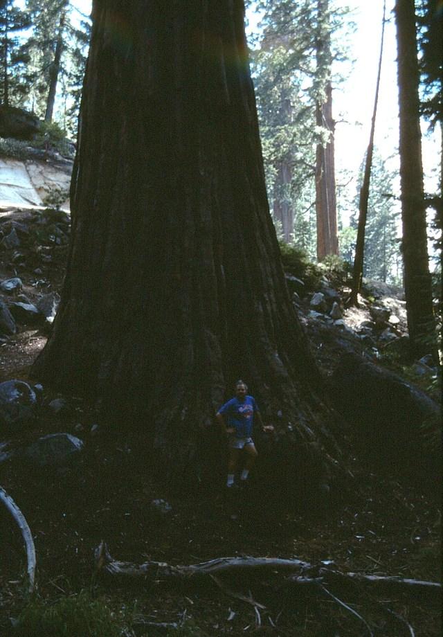 6-88-107redwoods