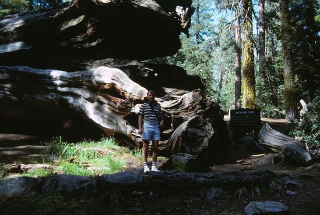 6-88-108redwoods