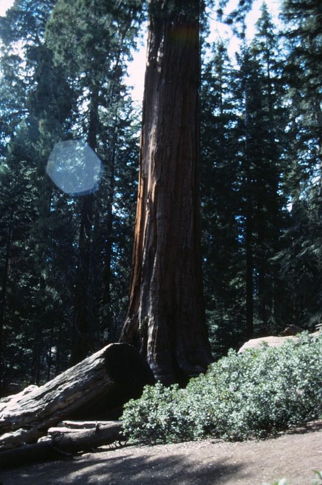 6-88-109redwoods