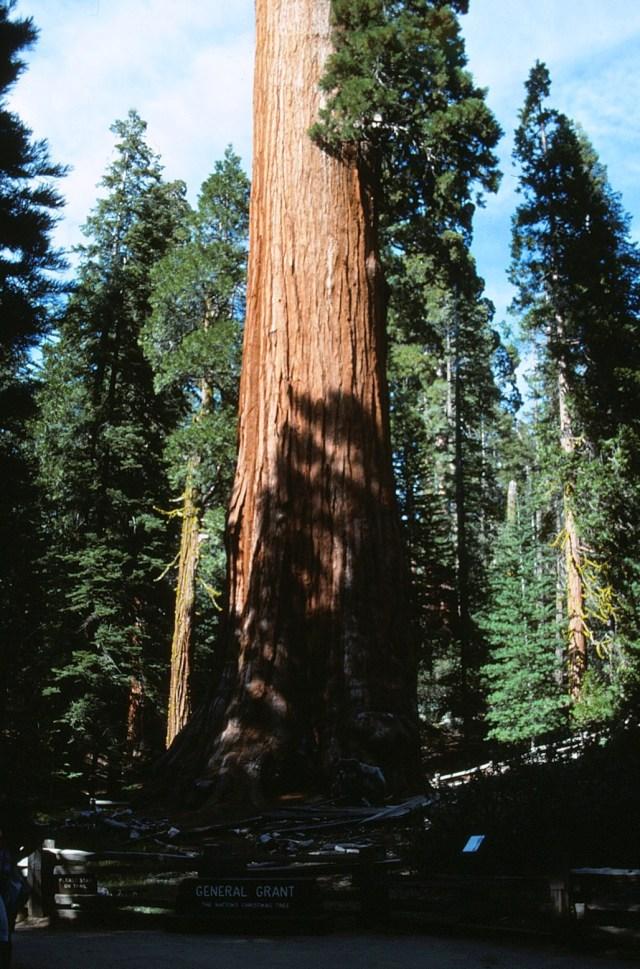 6-88-112sequoias