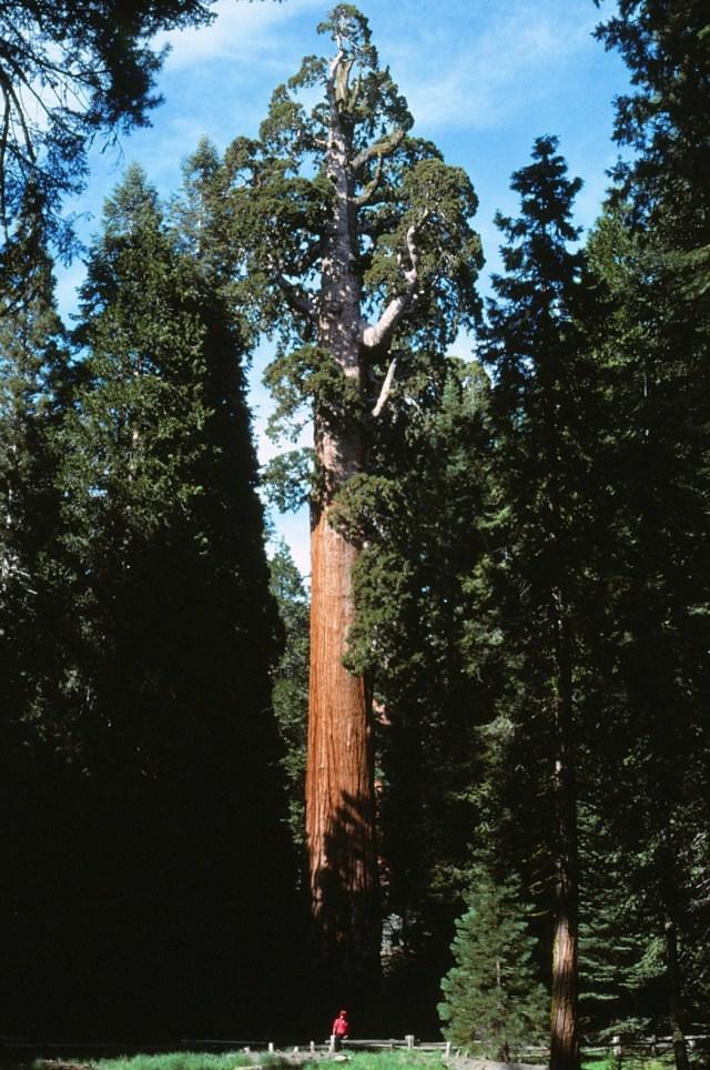 6-88-114sequoias