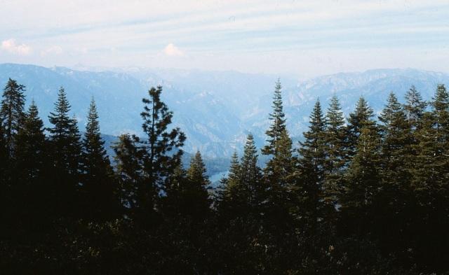 6-88-115sequoias