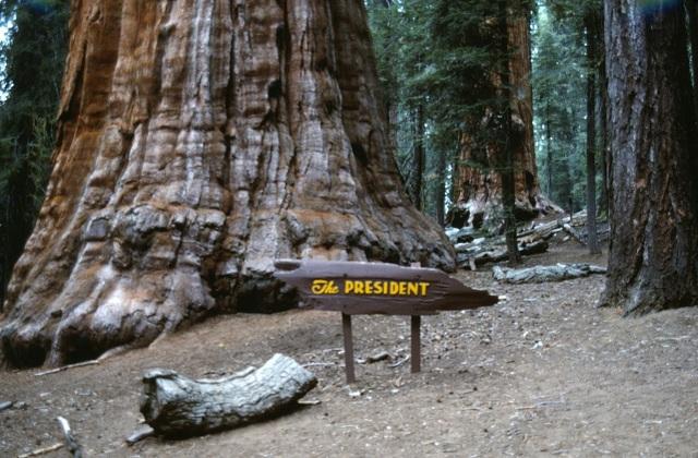 6-88-133sequoias