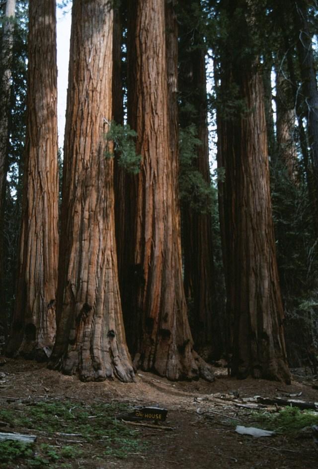 6-88-136sequoias