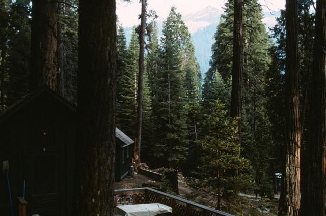 6-88-138sequoias